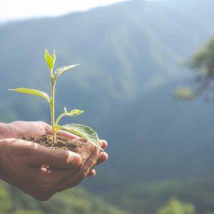 epargnants-sensibles-investissement-ecologique-responsable-isr
